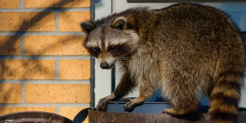 South Carolina Wildlife Removal